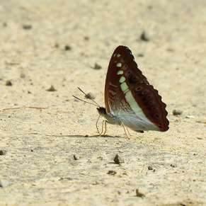 Butterfly Watching In Tamenglong, Manipur