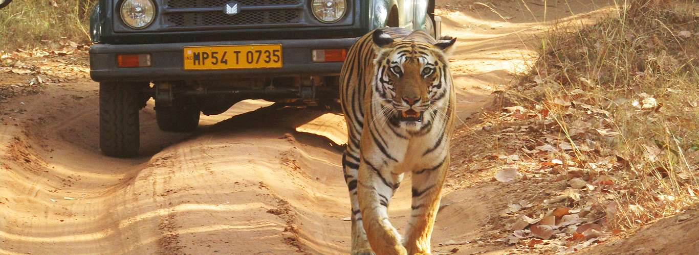 The Birds and the Beasts of Bandhavgarh