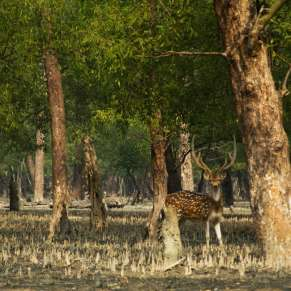 Life In And Around Sunderbans National Park