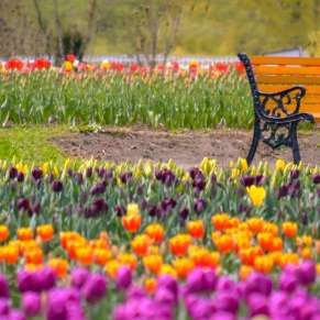 In Pictures: Gardens of Kashmir
