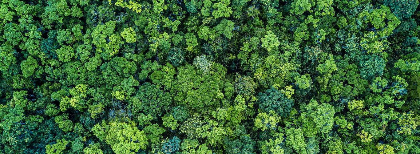Important Rainforests Of The World