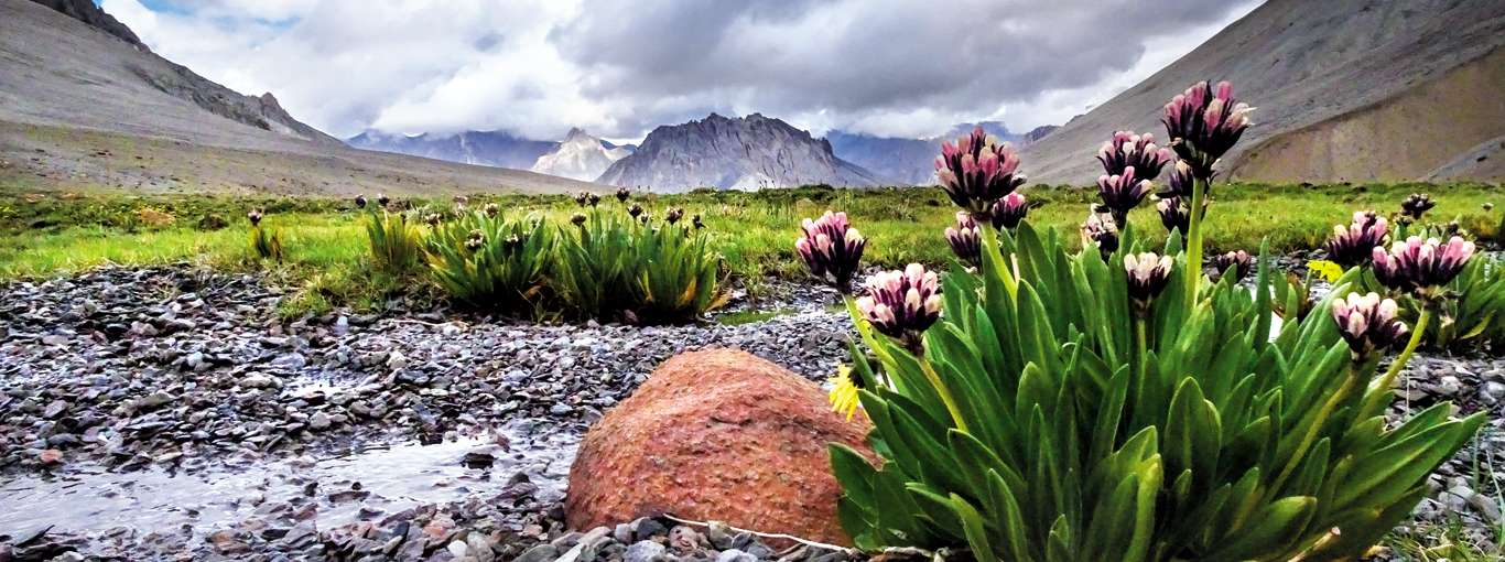 Is Ladakh Our Secret 'Valley Of Flowers'?