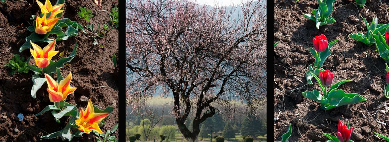 Walk With A Spring In Your Step In Kashmir