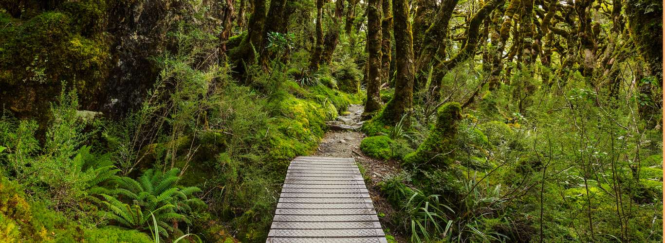 Take A Hike: Explore New Zealand With The 10 Great Walks