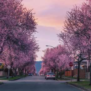 Take a Virtual Tour of Spring across the World