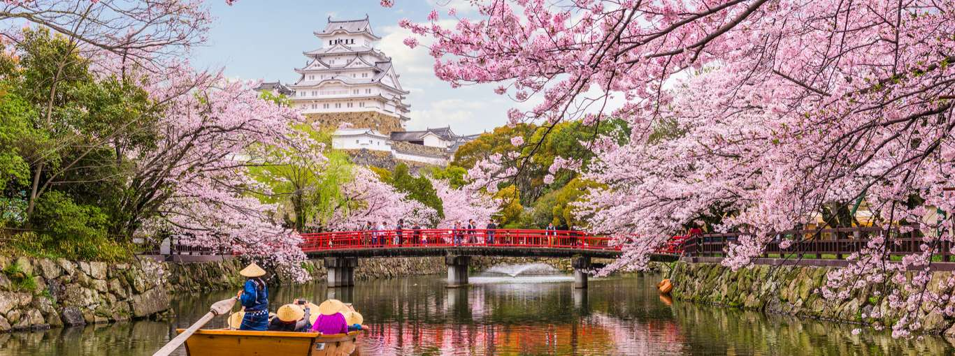 A Look at the Early Yet Beautiful Cherry Blossoms in Japan in 2020