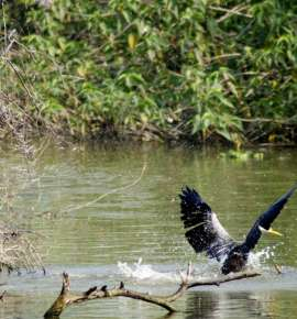 In Pictures: Birding at Keoladeo National Park