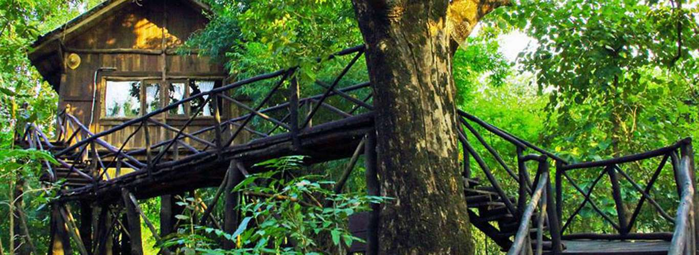 Jungle Resorts Near National Parks To Bring You Closer To Nature