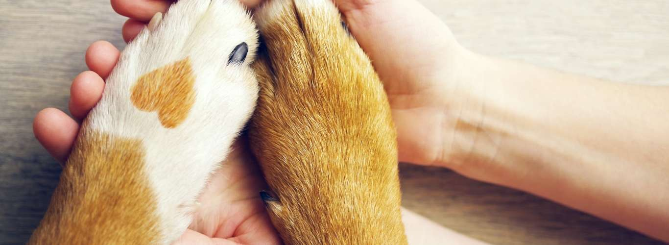 6 Pet-Friendly Stays in India