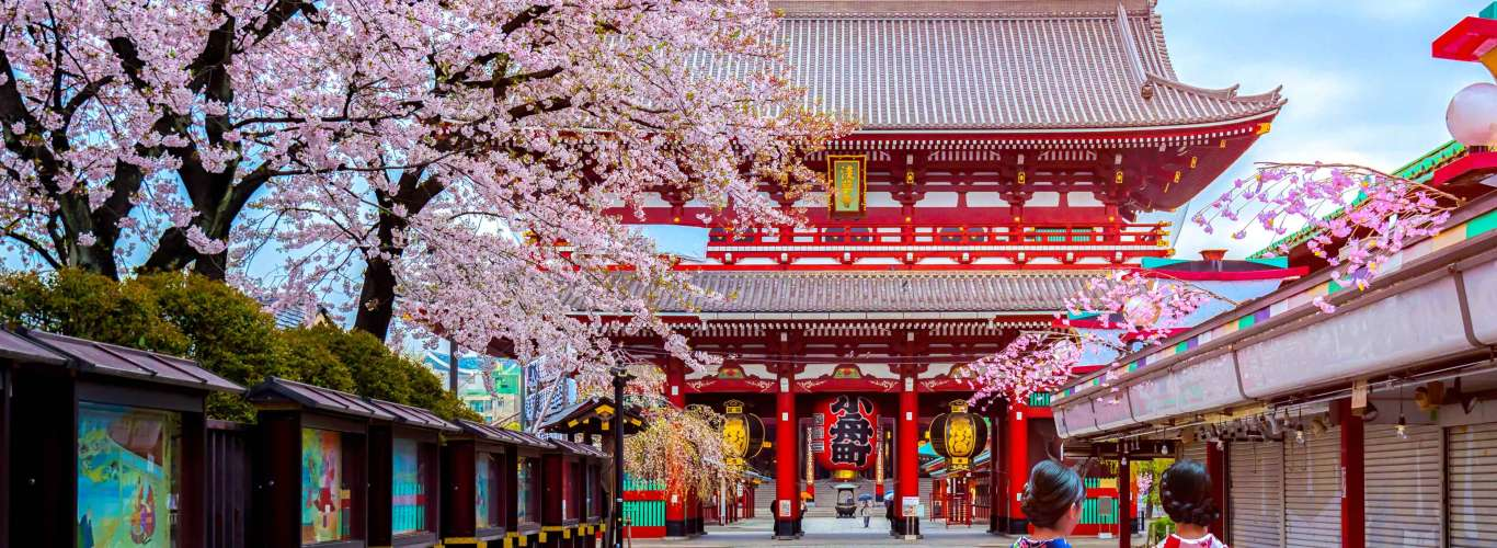 From 2020, It's A Direct Flight To See Cherry Blossoms