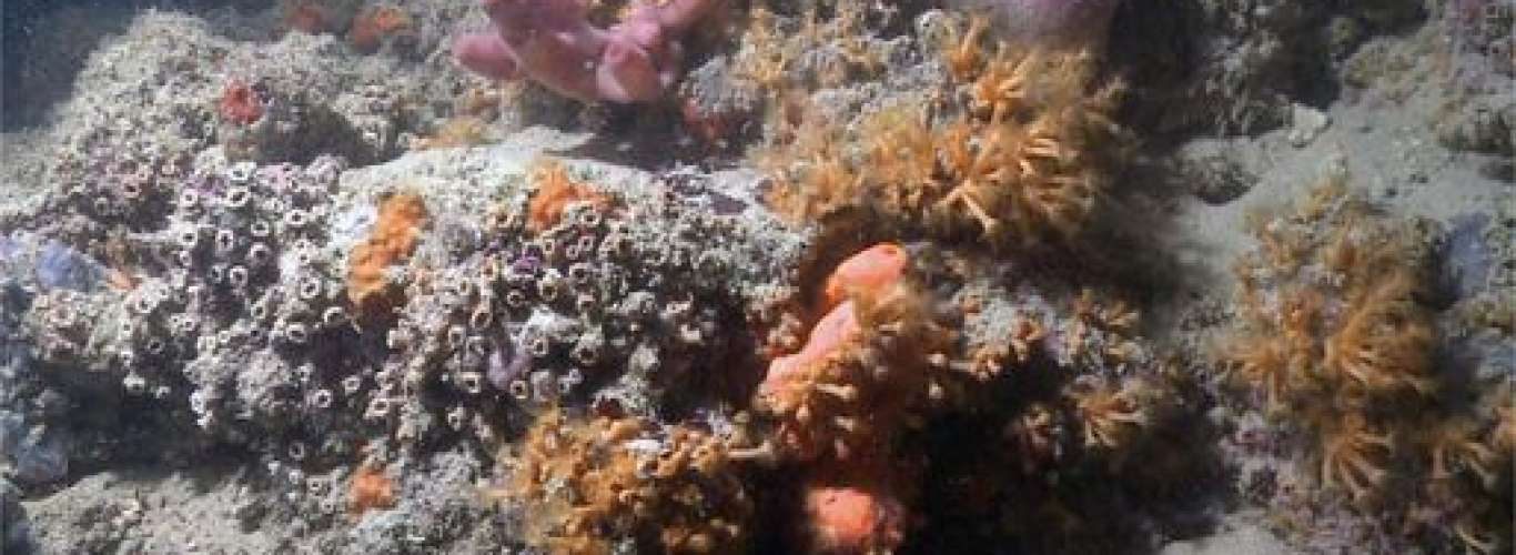 A Coral Reef Has Been Discovered In Italy