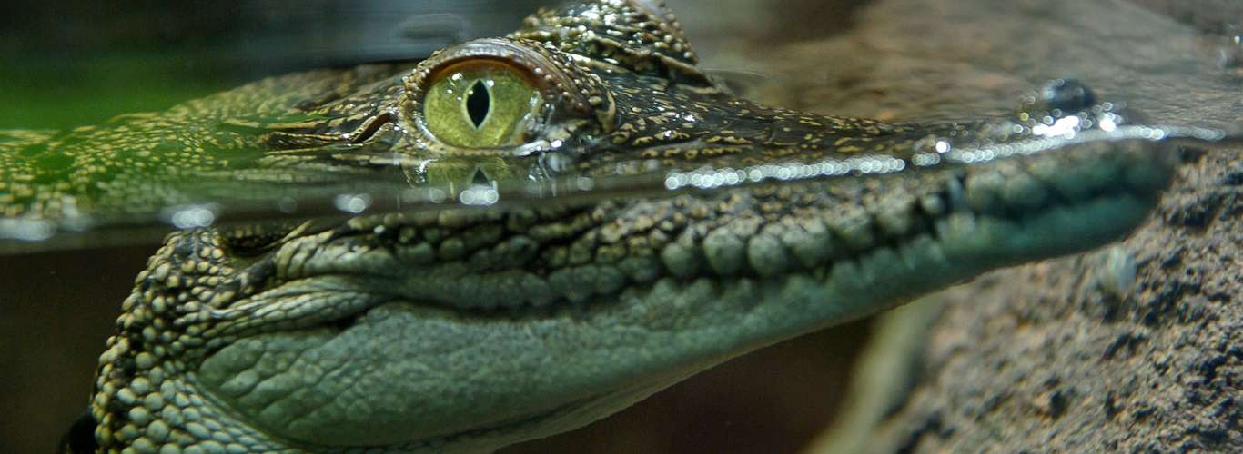 travel channel 10 000 sweepstakes bhitarkanika national park reopens after crocodile mating 6467