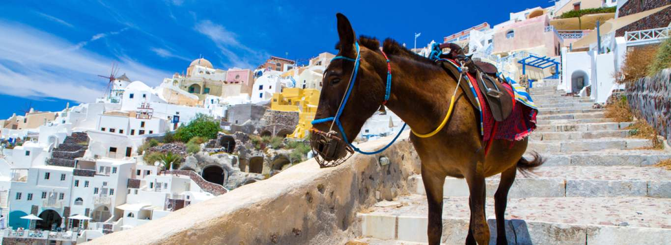 Don't Take The Donkeys In Santorini For A Ride