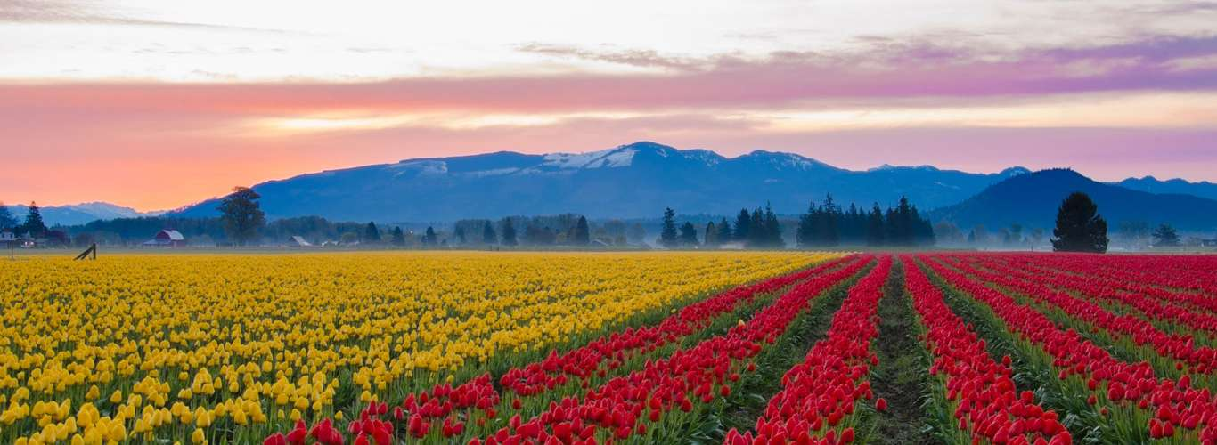 Spring Has Sprung In Kashmir With A Tulip Festival
