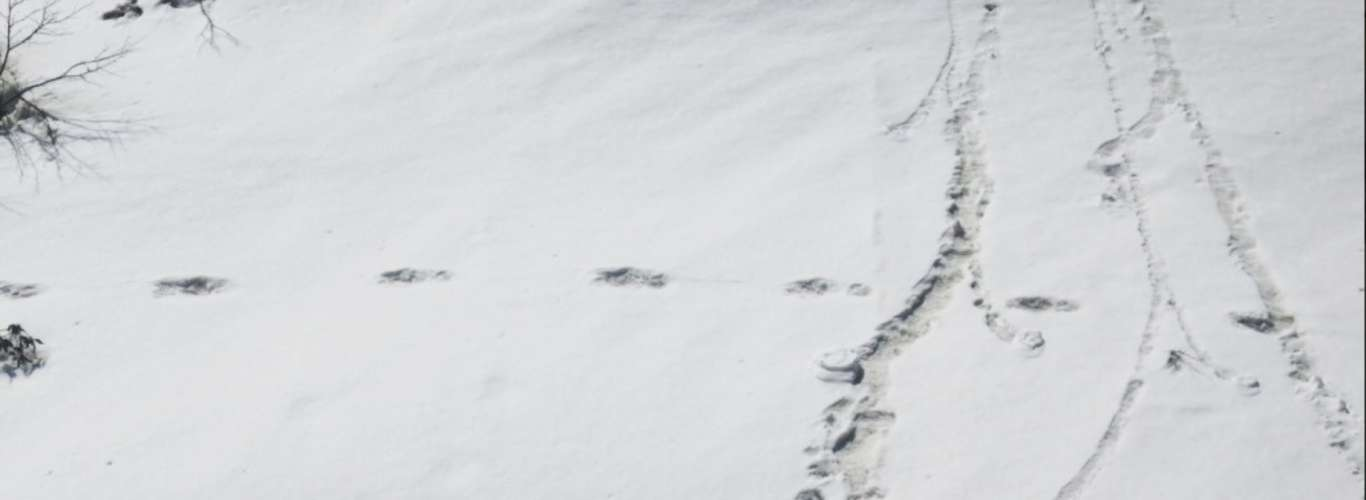 Is There Really A Yeti In The Himalayas?