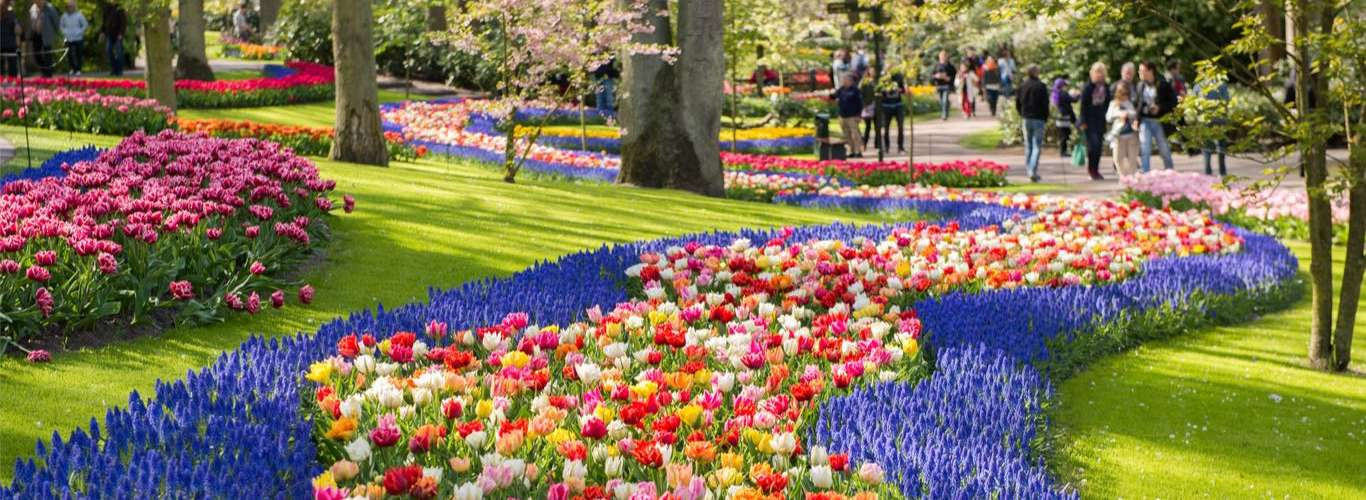 Take A Virtual Tour To The Netherlands' World-Famous Tulip Gardens