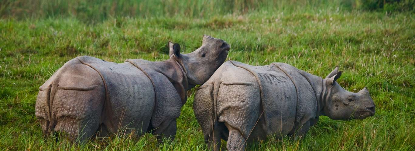 Look Out For The Rhinos At Jim Corbett National Park