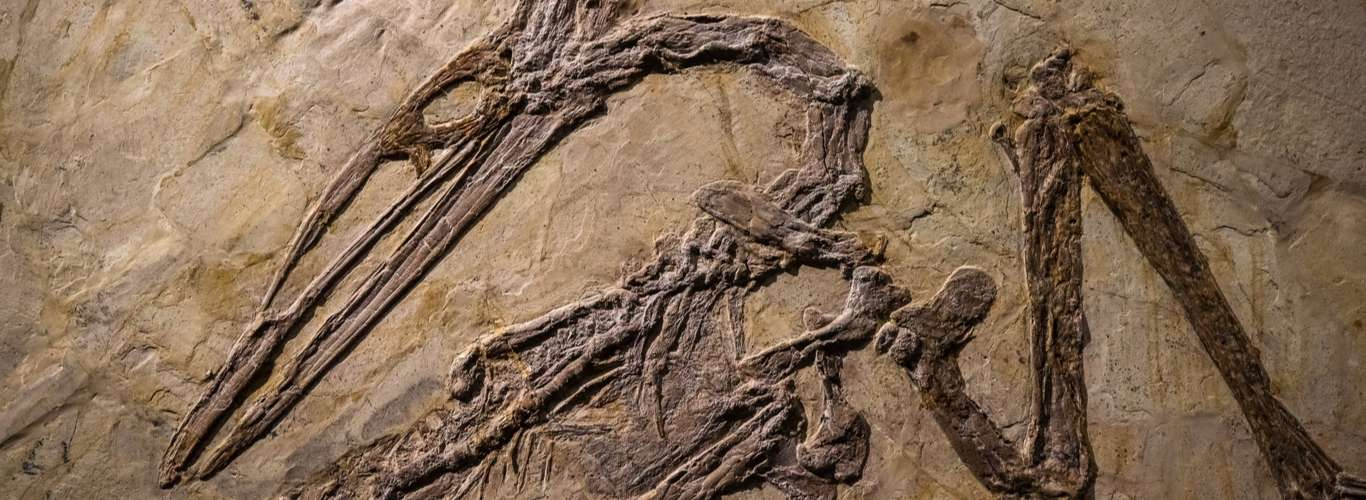 Giant Bird Fossils with 21ft Wingspans Found in Antarctica