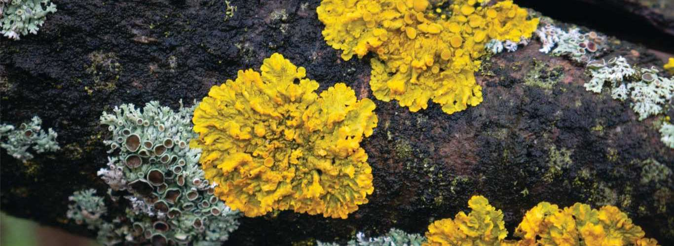 India's First Lichen Park Comes up in Uttarakhand