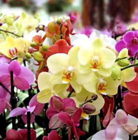 New Orchidarium in Shillong Boosts Tourism in Meghalaya