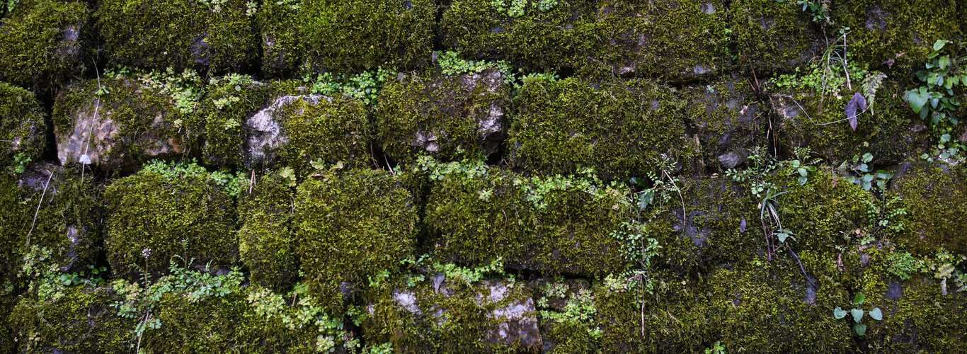 Headed to Kumaon? Don't Miss India's First Moss Garden