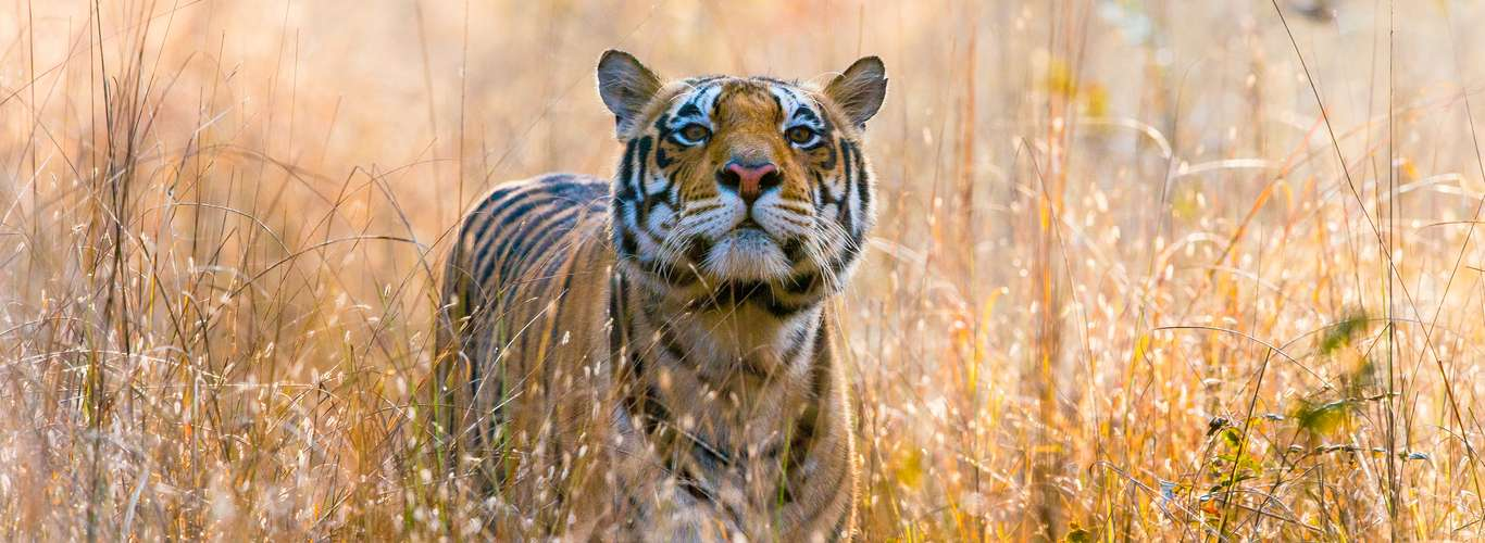 Madhya Pradesh to Open National Parks and Reserves for a Month