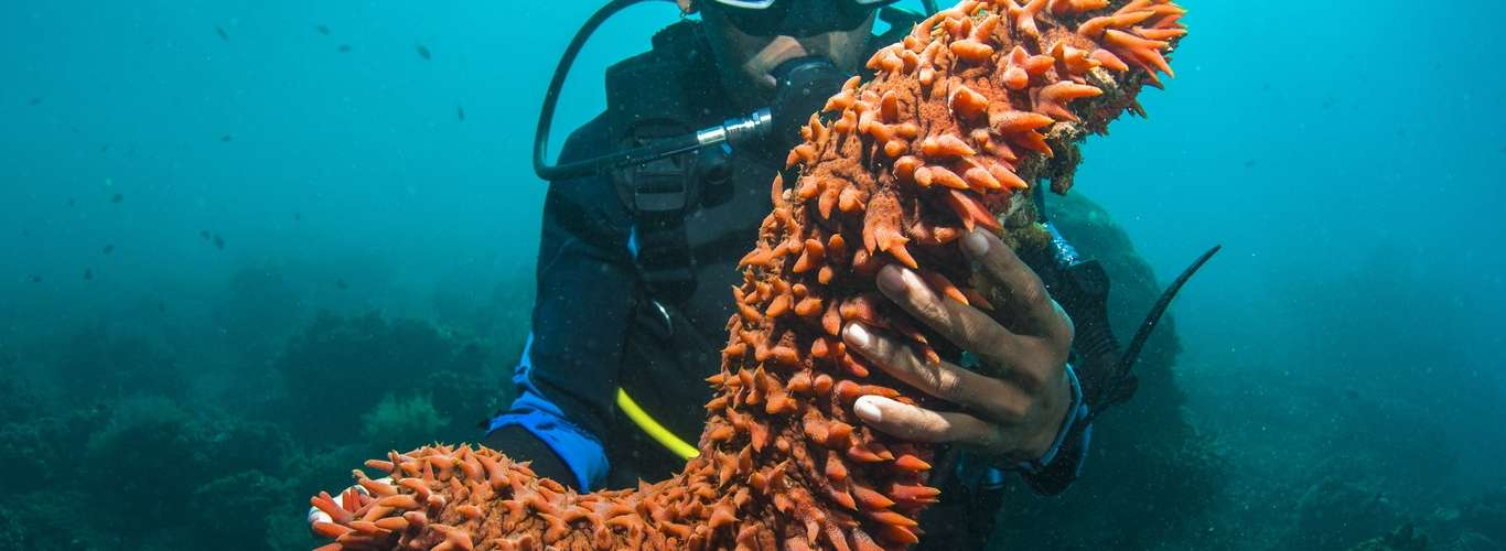 The World's First Sea Cucumber Conservation Reserve Coming Up In Lakshwadeep