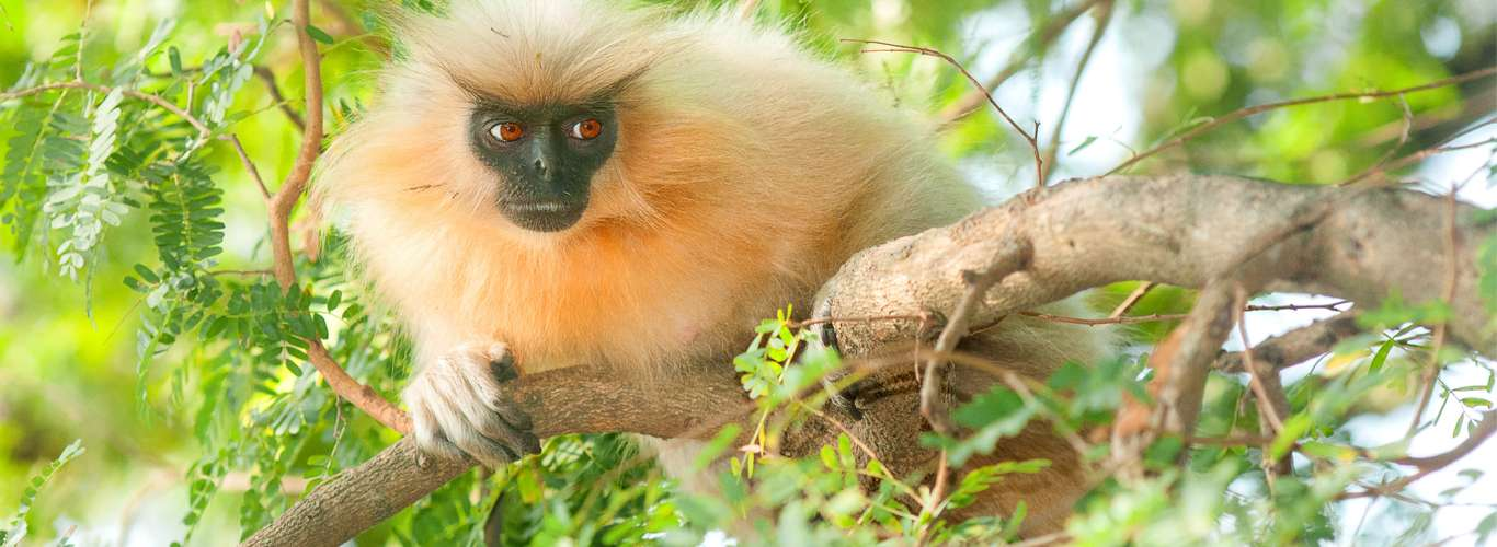 Raimona and Dehing Patkai in Assam Notified as National Parks