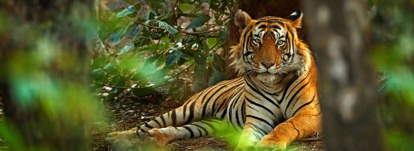 Learn To Care For The Environment At The Valmiki Tiger Reserve