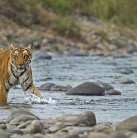 Corbett Tiger Reserve Opens Five Zones for Day Visits Round the Year