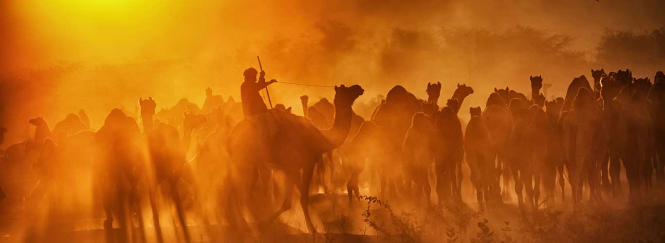 Why You Should Visit The Pushkar Camel Fair