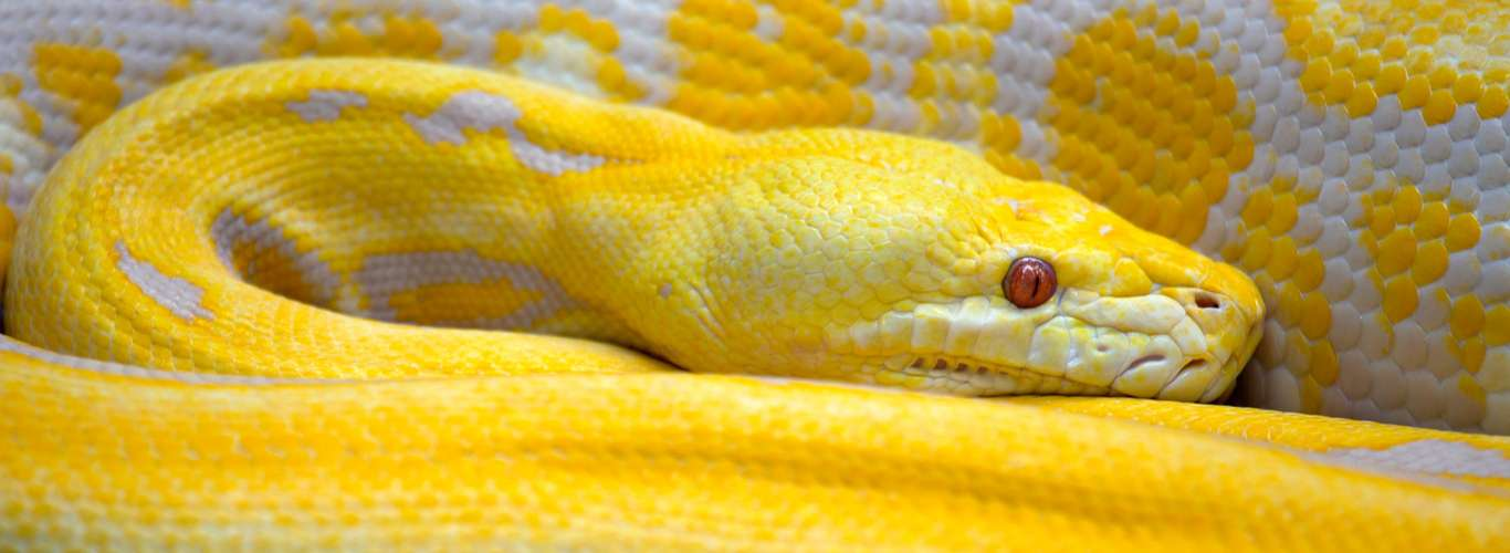 A Search Across the Globe to Find a Snake Spotted 15 Years Ago