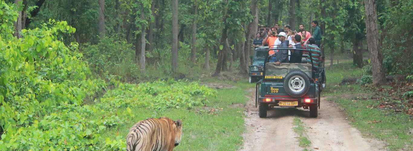 Tiger Forests of Madhya Pradesh Open From June 15
