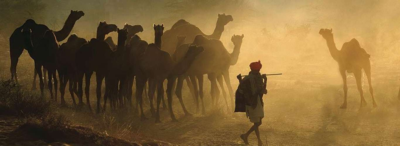 At the Pushkar Camel Fair of Rajasthan