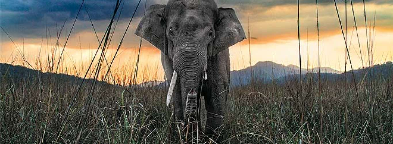 The giant tuskers in pictures