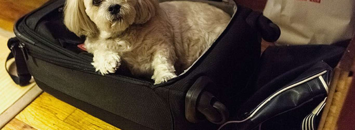 Travelling with pets just got easier