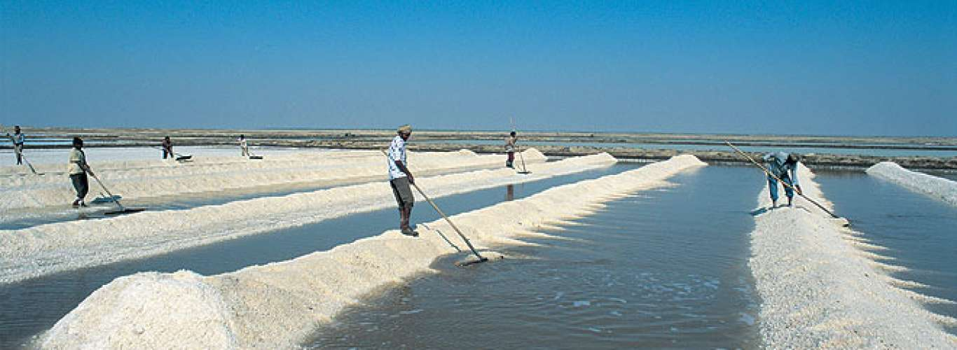 Gujarat: Salt Flats of Little Rann of Kutch