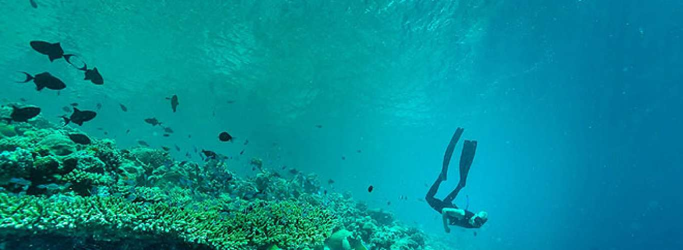 Learn free-diving in the Maldives