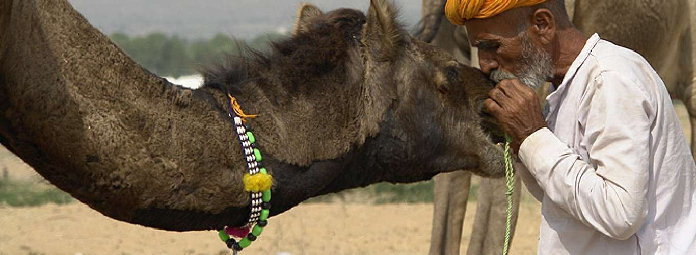 Rajasthan: Pushkar Camel Fair