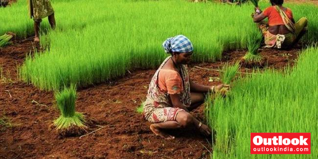 Indian Women's Unaccounted Labour In Agriculture Cause Of Malnutrition In India: Study