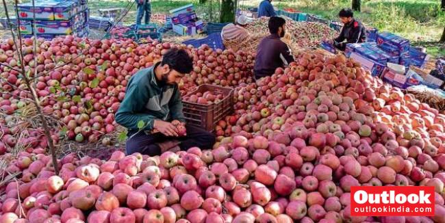 'Azadi', 'Burhan Wani' Written On Apples From Kashmir, Police Starts Probe