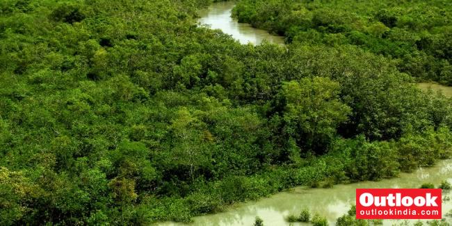 Sundari Trees In Sundarban Delta Are Dying A Slow Death. Is Anyone Listening?