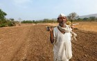 Cropped out A Beed farmer in his dry field