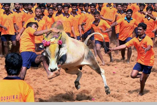 Centre will wait for apex court verdict on jallikattu: Union Minister