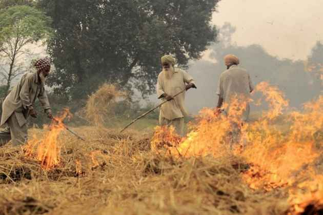 Punjab farmers burn stubble to protest prohibition orders