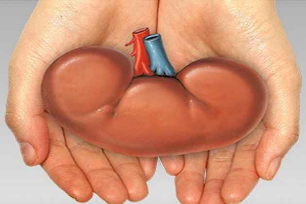 Woman Tries To Sell Kidney To Meet Demand of Her Lover, Saved
