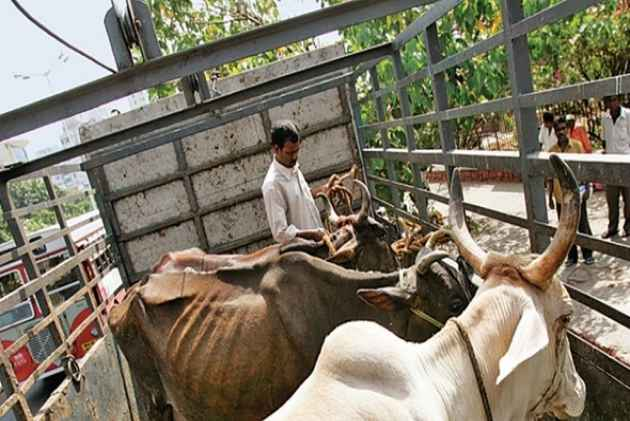 Cow smuggler killed by suspected cow protection vigilantes in India