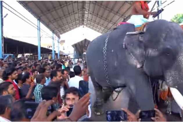 Kerala: Three Elephants Run Amok At Guruvayur Temple, Mahout Injured