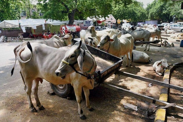 Madras HC stays cattle slaughter ban for 4 weeks