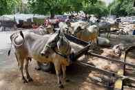 Madras High Court Stays Centre's Order To Ban Cattle Sale For Slaughter By Four-Weeks